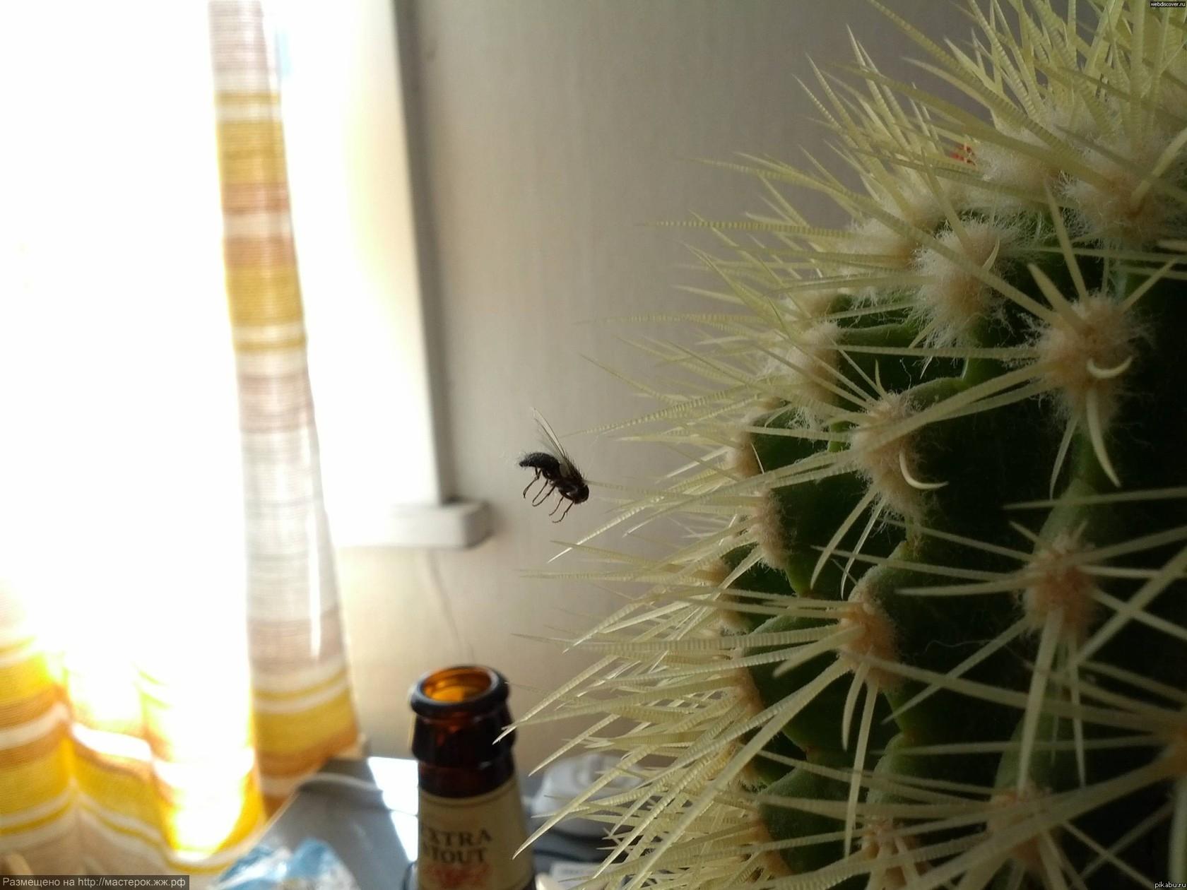 суицид-кактус-муха-фото-приколы-283364 (Копировать)
