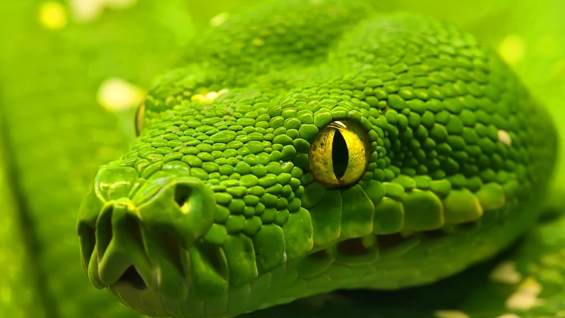 Mamba змея зеленая