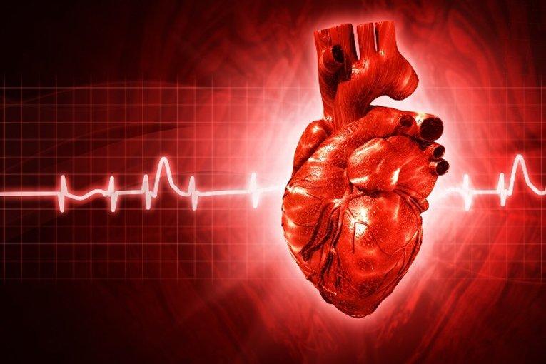 Российские ученые первыми в мире разморозили и запустили сердце