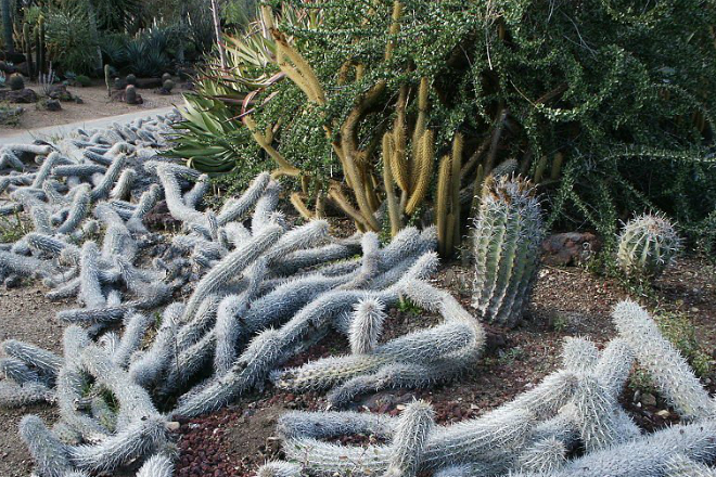 Растение убивает части себя, чтобы двигаться по земле