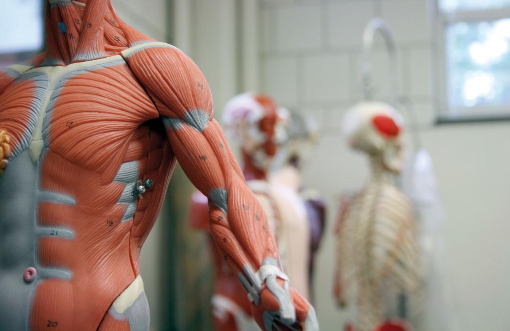 Робот с живыми мышцами