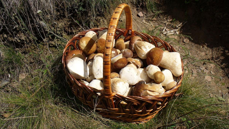 Будет ли введен налог на грибы и ягоды?