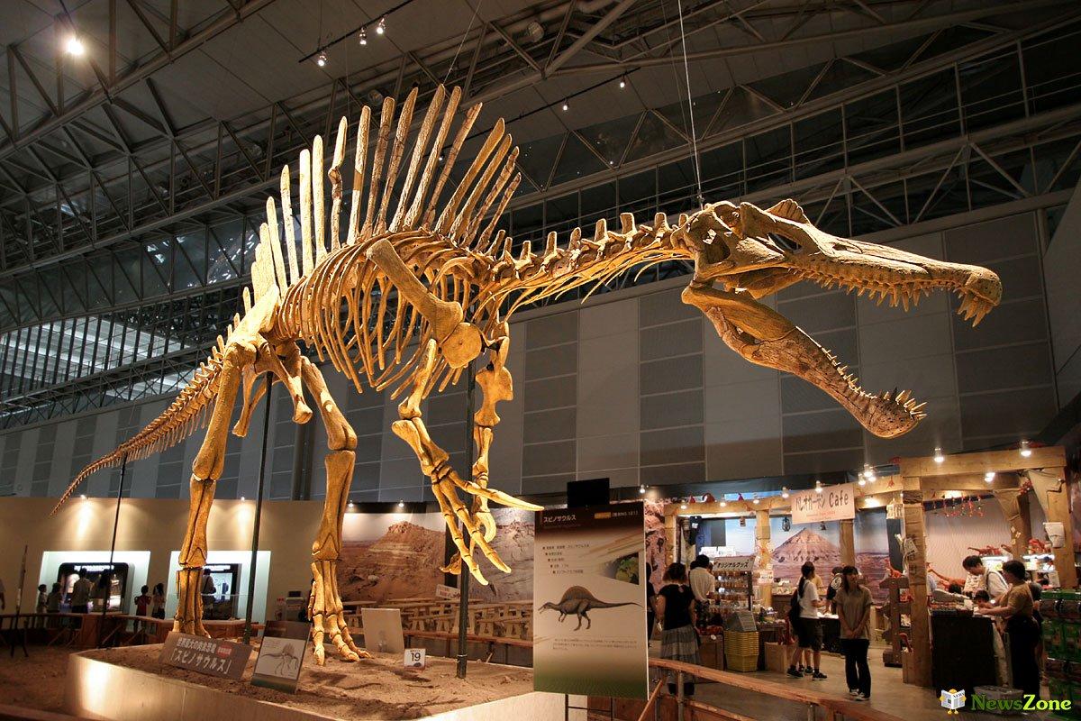 А вы знали, что кости динозавров - это не кости?