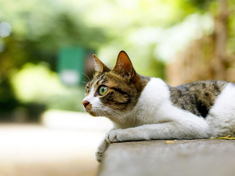 Зачем Новая Зеландия избавляется от кошек