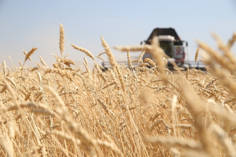 Russian wheat beats on American farmers China, Russia, grain, wheat, edition, newspaper, earlier, writes, more, the size, is, exports, goods, notes, indicator, Oreshkin, opportunities, reference, market, wheat
