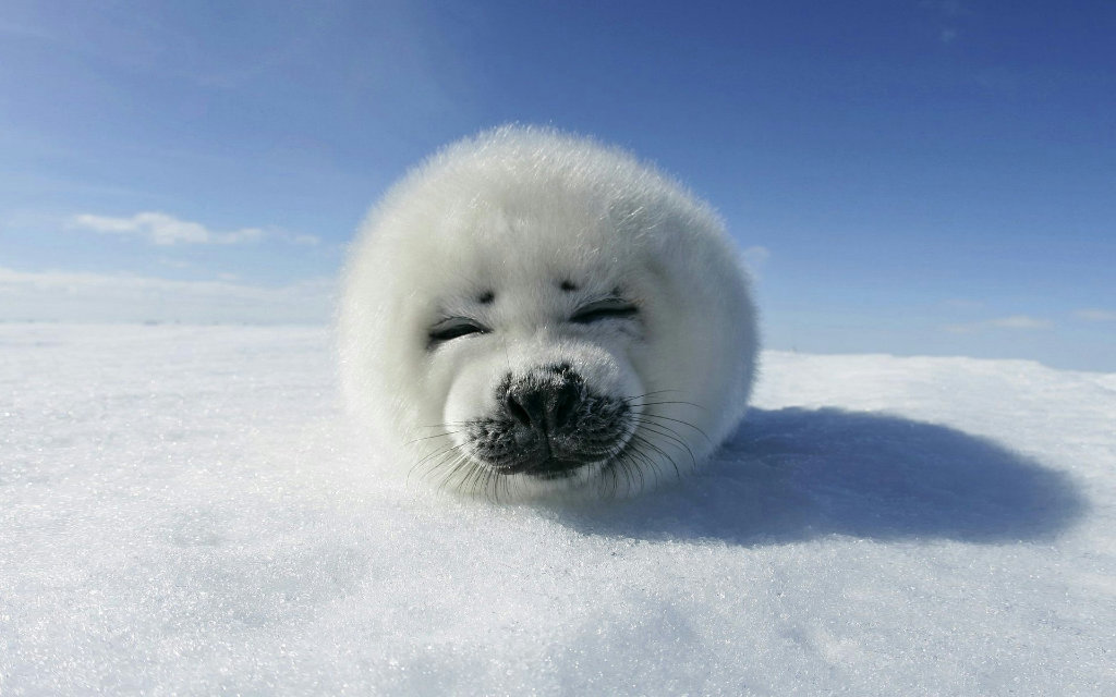 Школьники спасают тюленей и проводят экологический мониторинг планеты снимков, космических, школьников, России, конкурса, чтобы, тюленей, будут, возраста, работать, Белого, данных, залежек, детям, помощью, география, первый, крупные, найти, стать