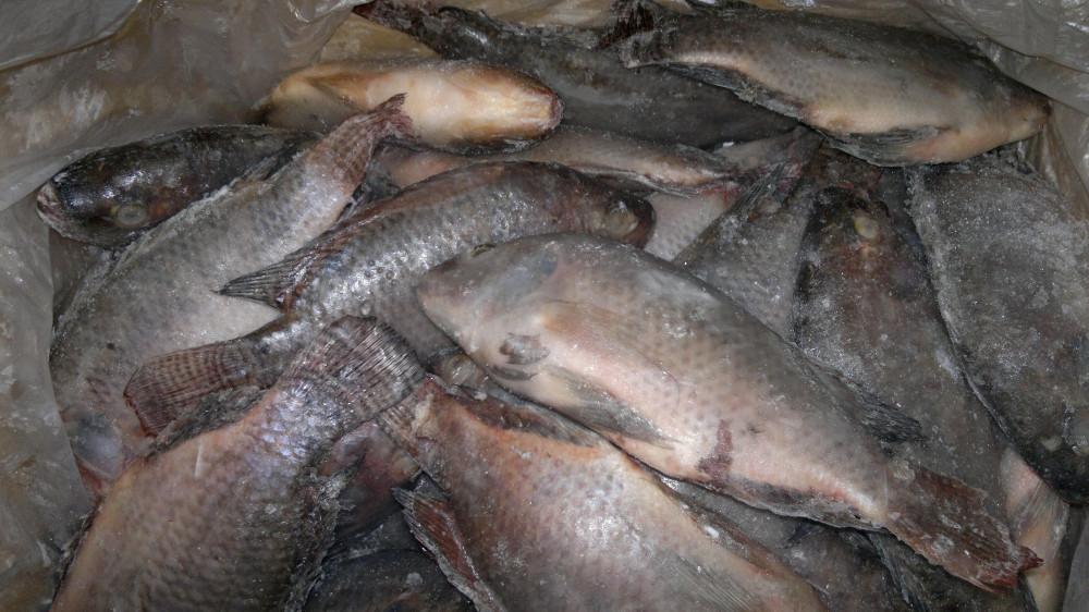 Почему у нас в магазинах мороженную рыбу не оживляют как японцы?
