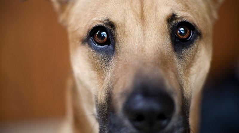 Правда ли, что собаки дальтоники?