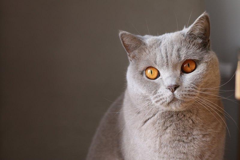 Кто, когда и зачем приручил первую кошку?