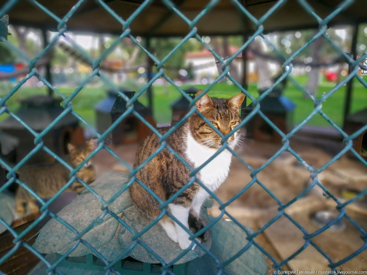 Может ли кошка жить в клетке?