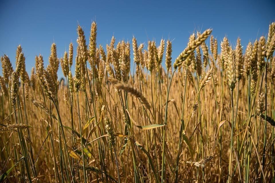 Ученые усовершенствовали фотосинтез и ускорили рост урожая на 40%