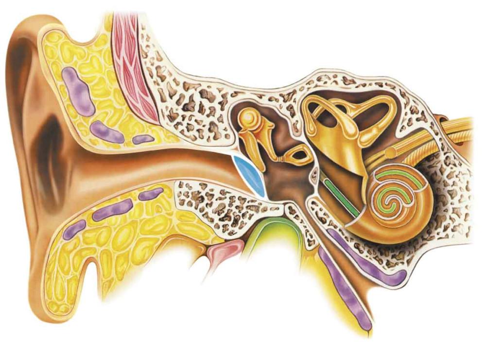 Нужно ли вычищать ушную серу из уха? интересно
