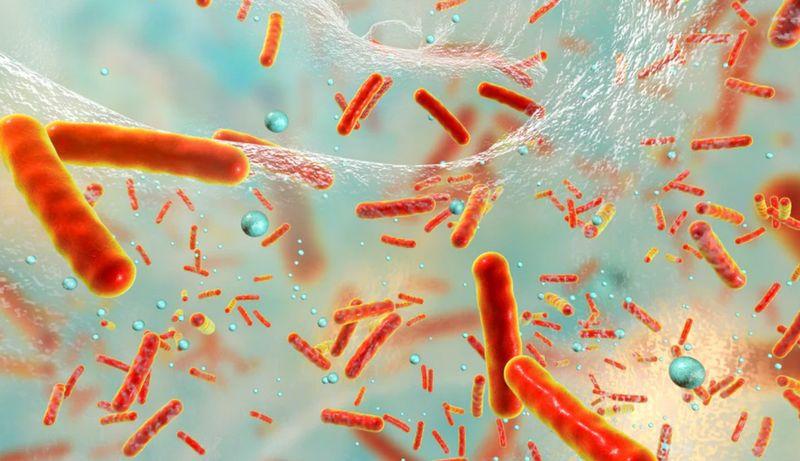 Бактерии жертвуют собой, чтобы защитить колонию от антибиотиков