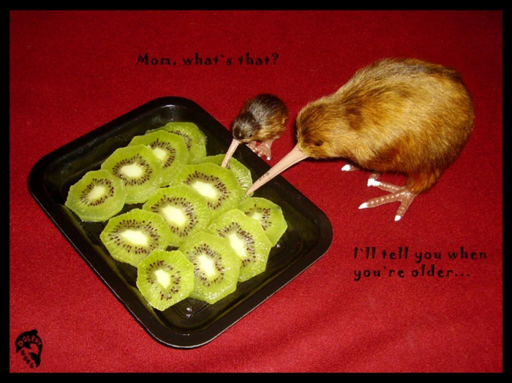 А вы знаете, почему фрукт КИВИ и птичка КИВИ?