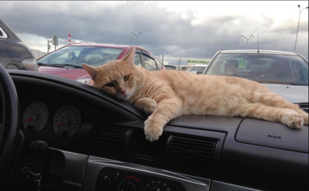 Котики рулят