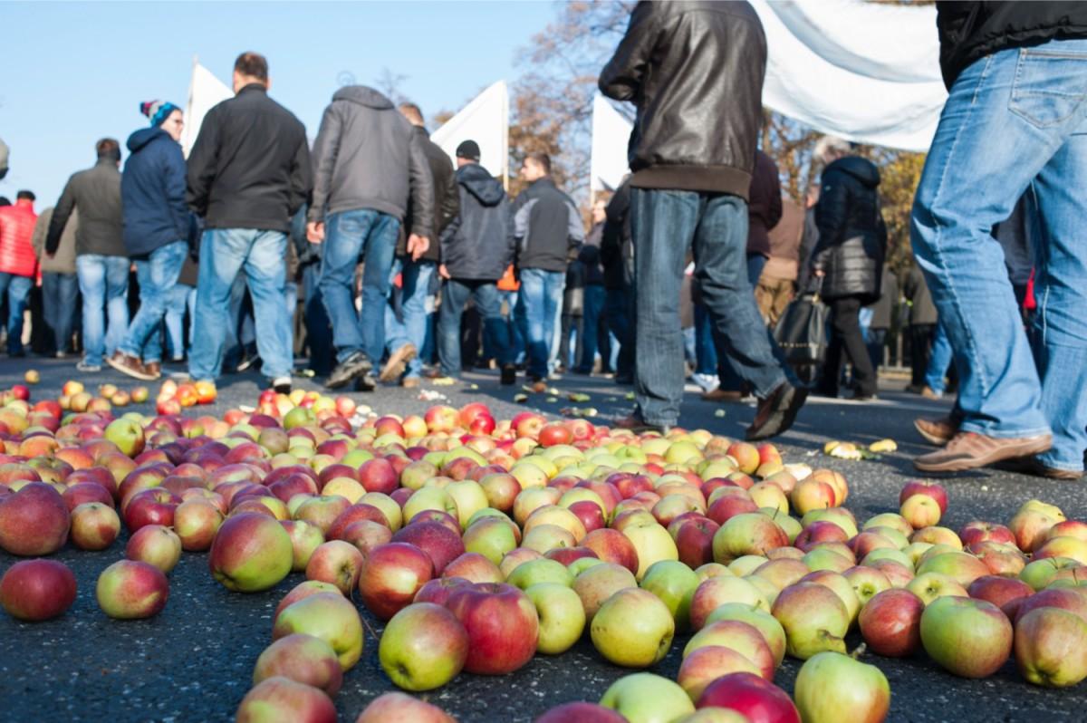 Польские яблоки останутся в Белоруссии