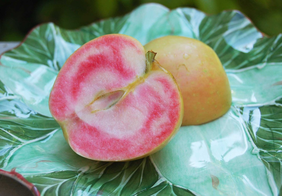 Розовый жемчуг яблок, выведен, вреде, генной, модификации, яблоня, взята, Недзвецкаякоренная, можно, Китая, родине, промышленных, масштабах, собственных, только, основу, выращивают, беспокоиться, естественным, селекционером
