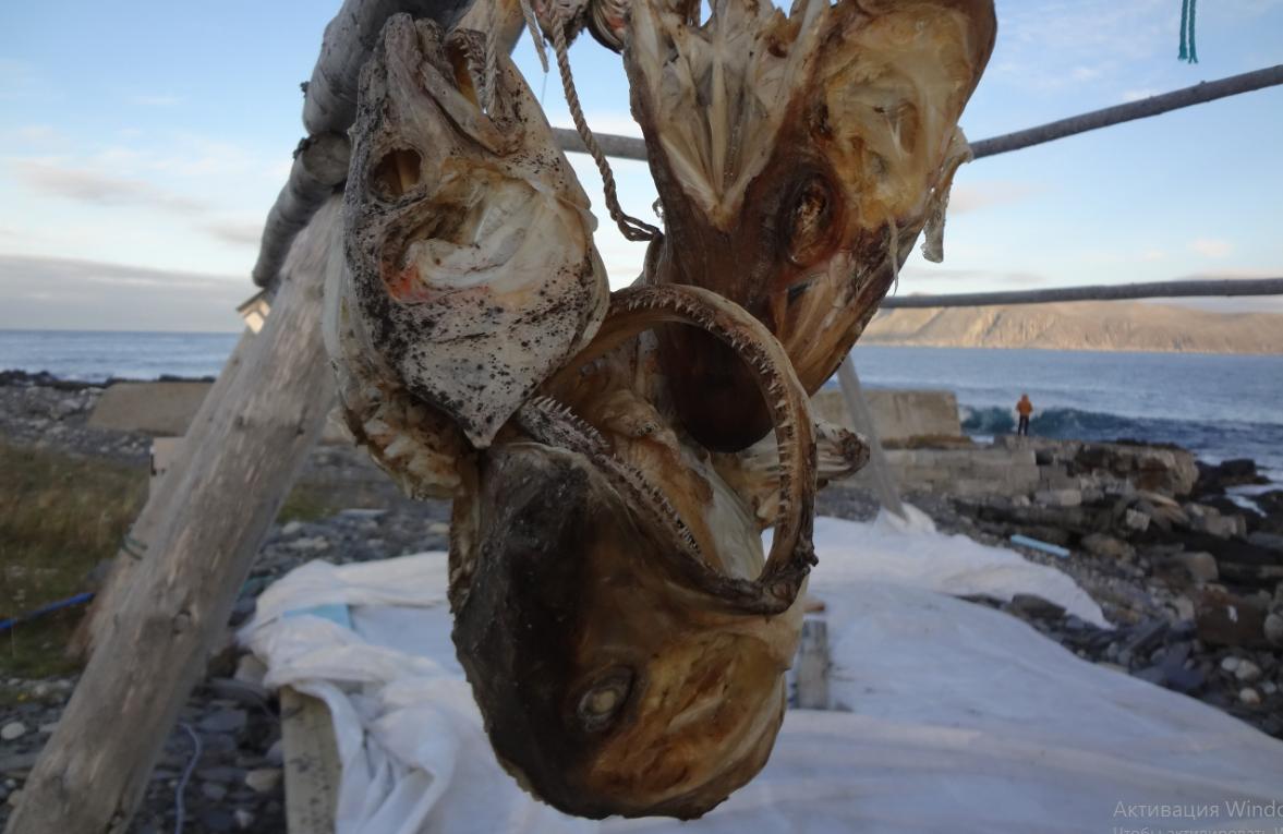 Норвегия хочет отравить Северное и Баренцево моря