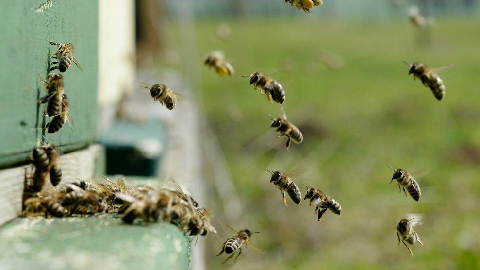 Апокалипсис среди насекомых