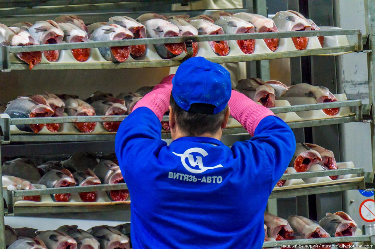 Как на Камчатке красную икру производят (часть 2) Камчатке, первый, предприятии, озеро, такой, предприятие, Озерновский, рыбаков, красной, ястыки, части, много, сторону, красную, потом, этого, столько, можно, пользуется, стандартам