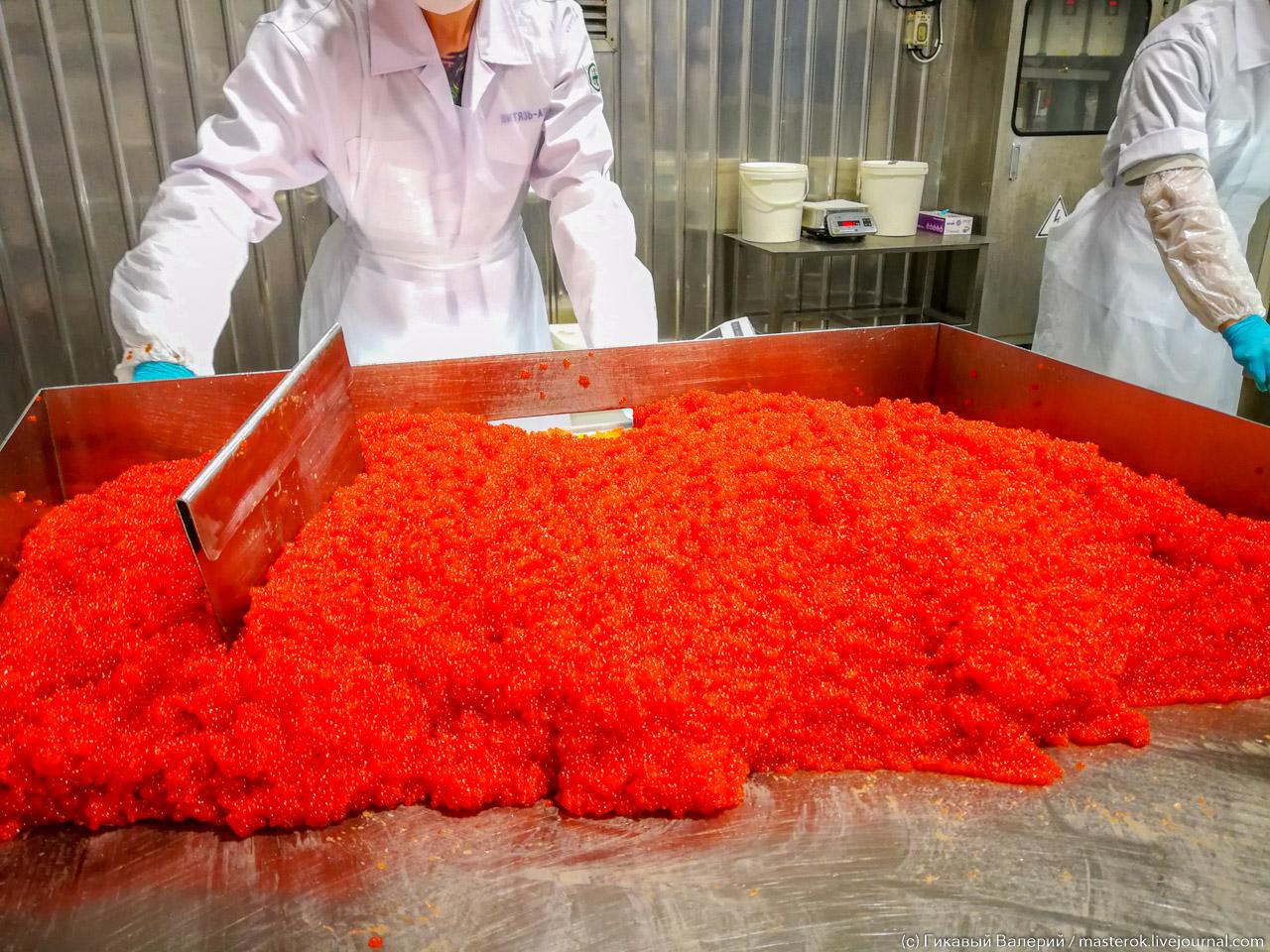 Как на Камчатке красную икру производят (часть 2)
