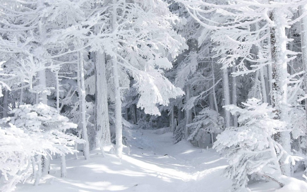 snow_white.jpg