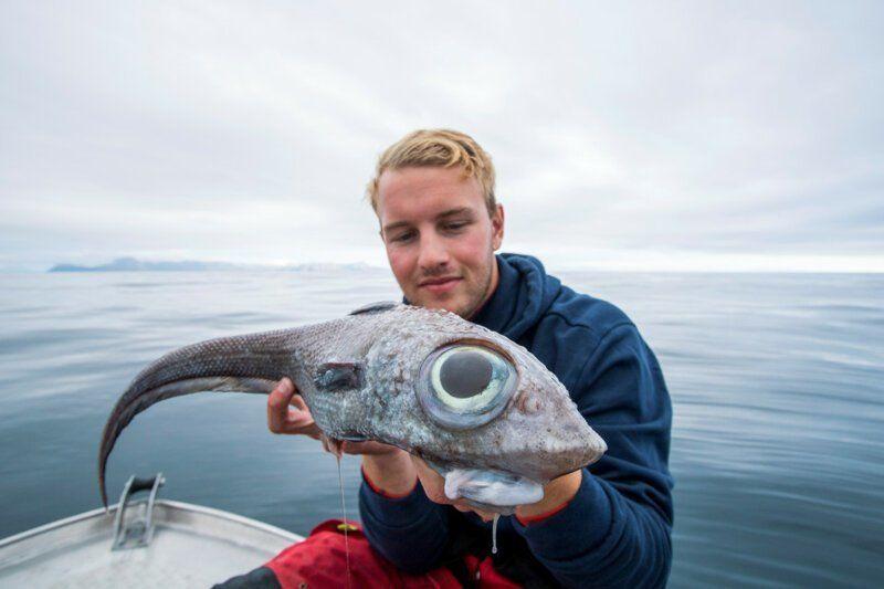 Рыба с огромными глазами?