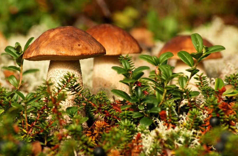 Самые опасные грибы в России