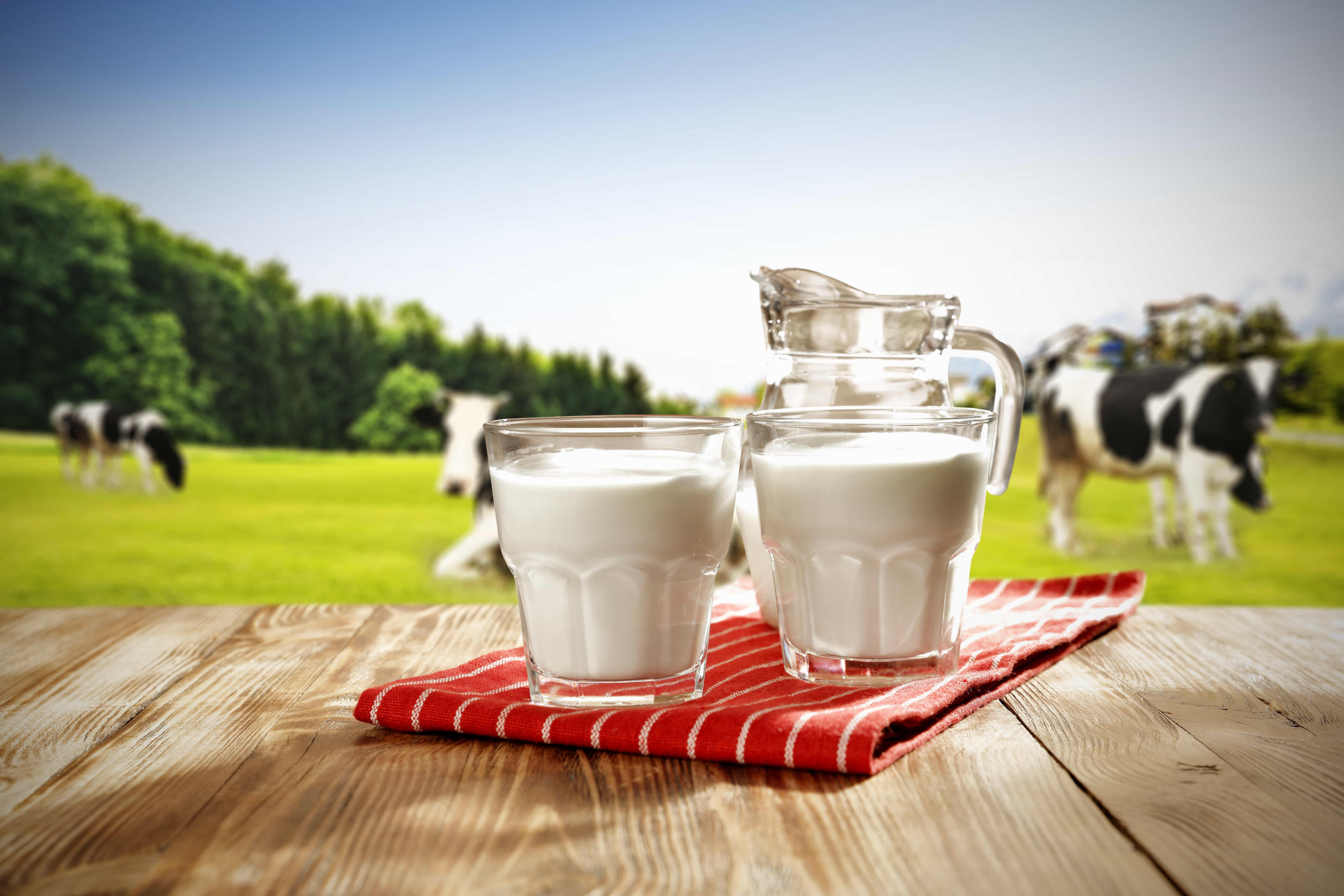 Картинки с коровами и молоком, надписью пожелания
