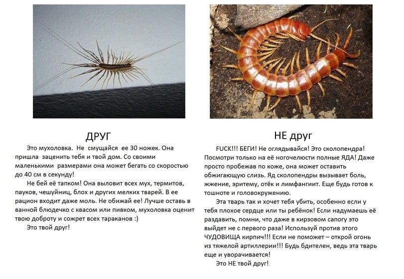 Друг живет, всего, помогаю, насекомых, никто, больше, живут, Огромный, падают, ночью, раковины, выбраться, время, времени, мухоловка, размеров, разных, таких, штуки, этаже