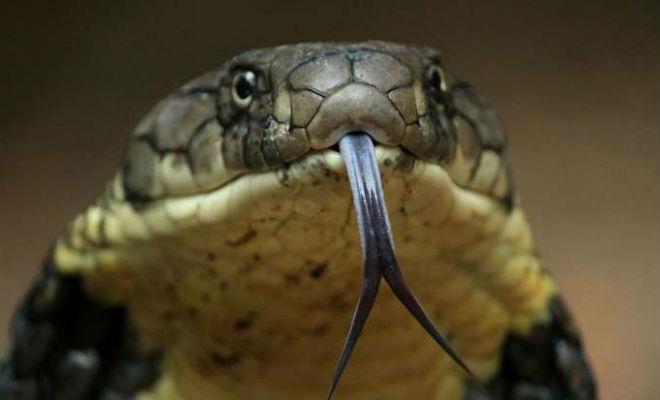 Зачем змее раздвоенный язык?: masterok — LiveJournal