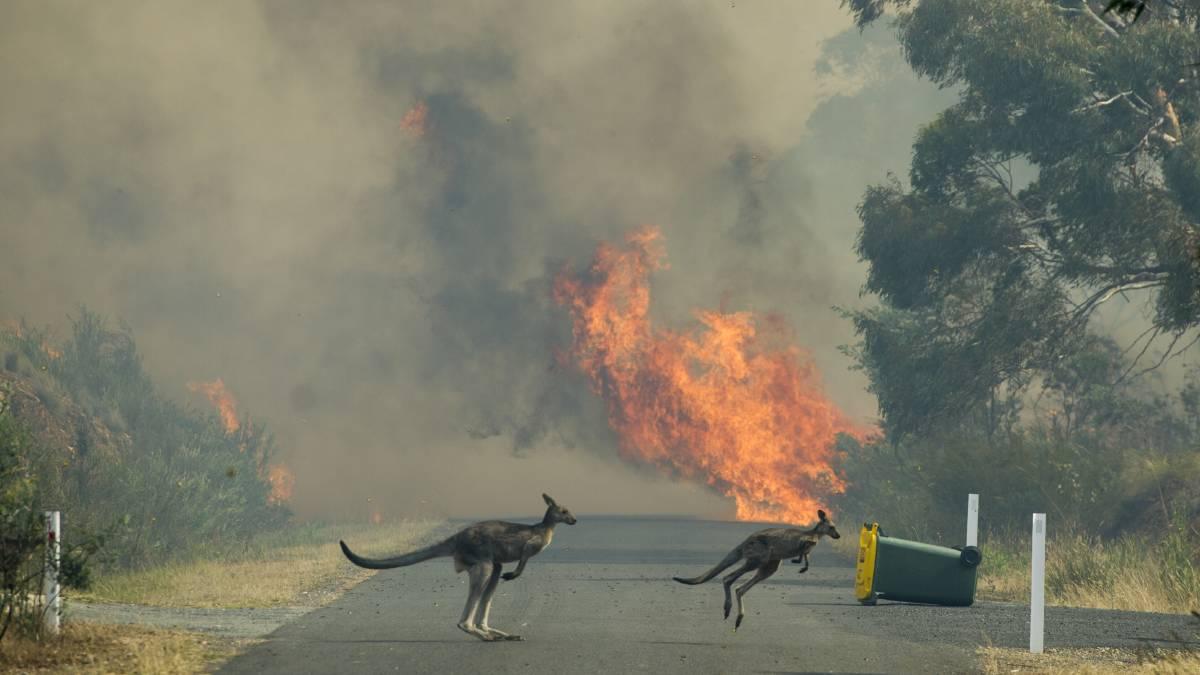 Сиднее объявили «катастрофический уровень пожарной опасности»