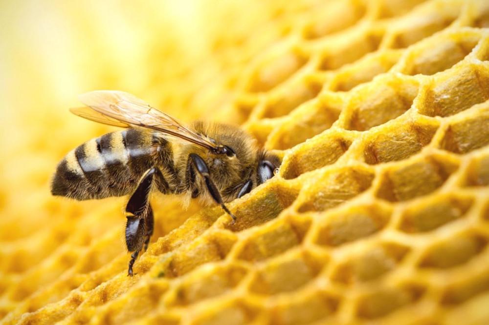 Почему пчелы делают больше меда, чем им нужно? Вопрос