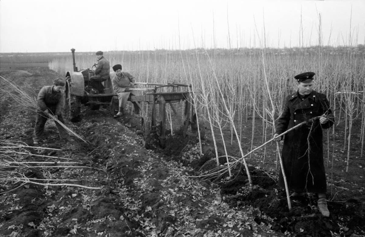 Почему в Советском Союзе повсеместно высаживали тополя? СССР,Вопросы