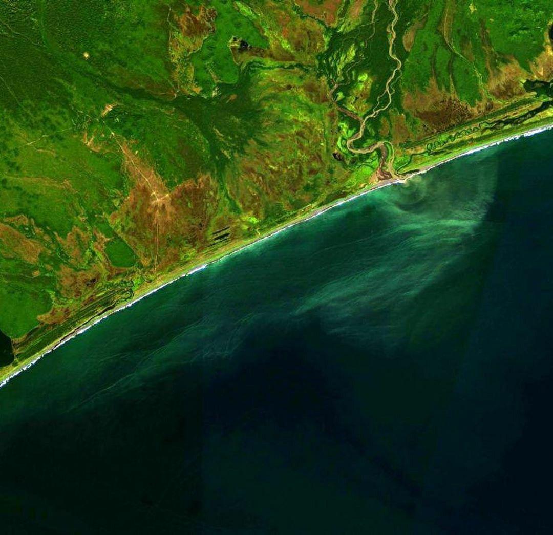 Как водоросли могли уничтожить жизнь на дне залива Камчатки? Камчатка
