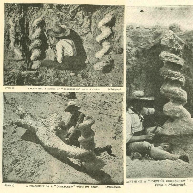 Дьявольские штопора или спирали Dæmonelix Древности