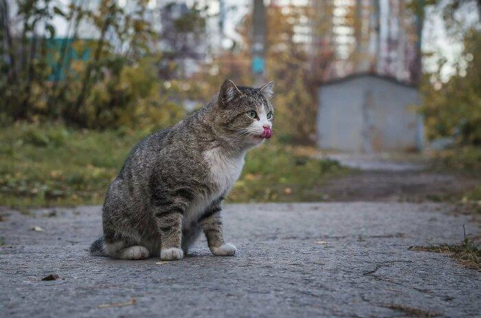 Почему беспородный кот намного лучше породистого Кошки