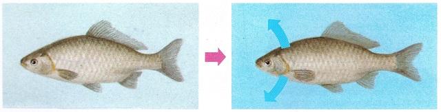 Пьют ли рыбы воду? Вопросы,Рыба