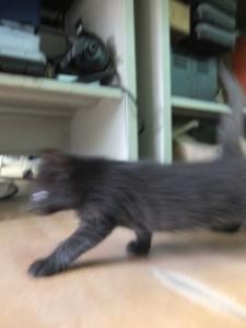 смазанная кошка