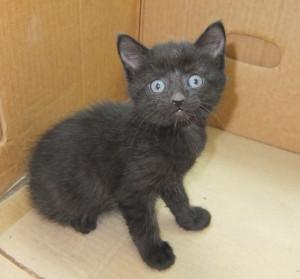 кошка со вспышкой