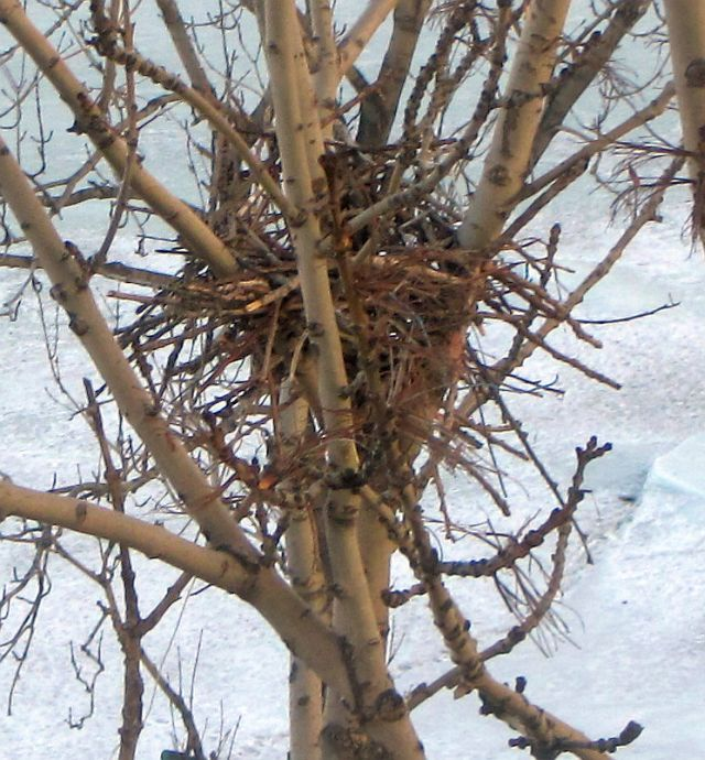 гнездо
