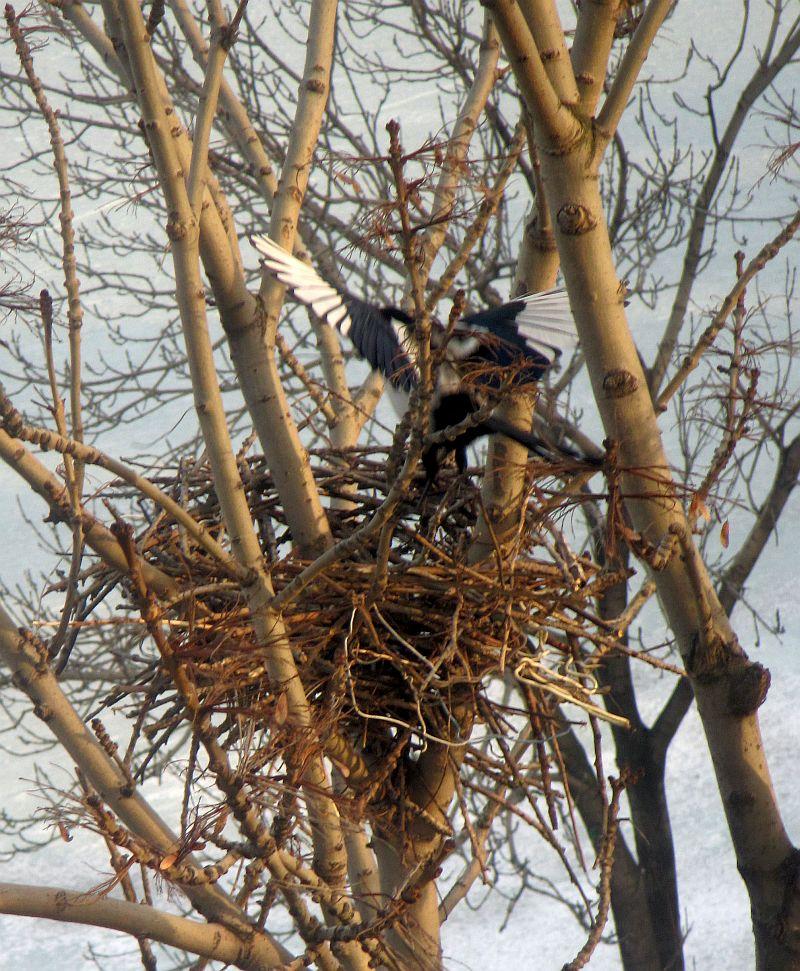 гнездо 2