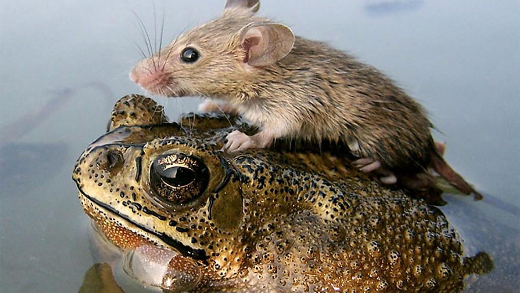 Крысы бегут с корабля...