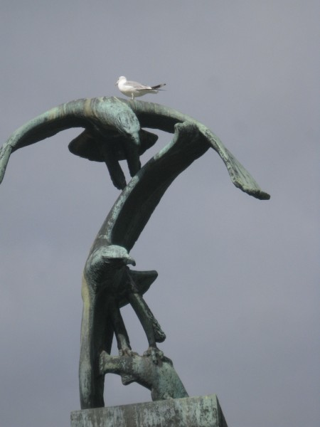 Чайка на орлах