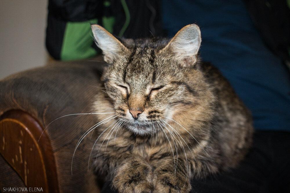 Коты Наташины-31.jpg