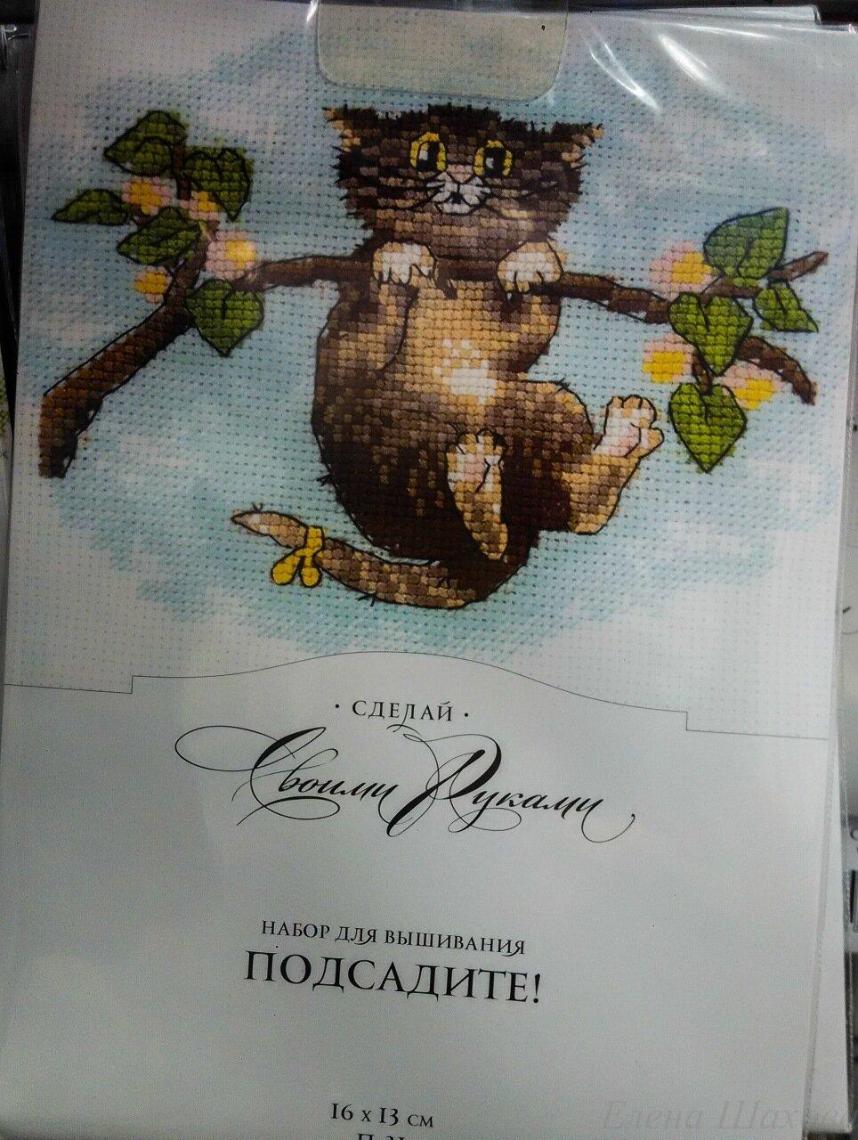 Котики по пятницам-7.jpg