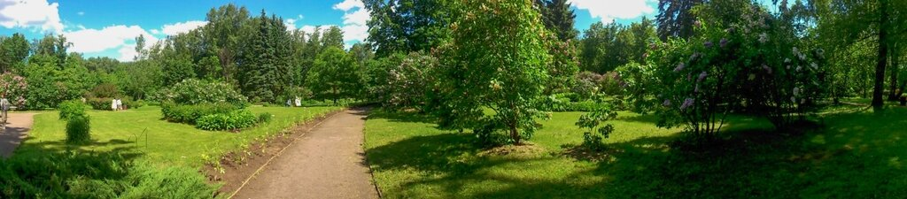 Сиреневый сад-11.jpg