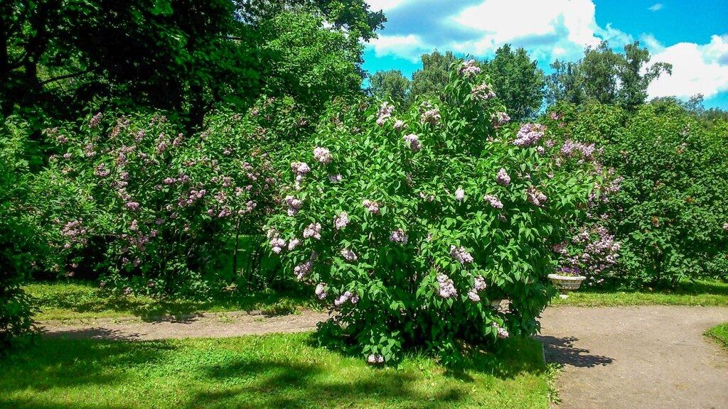 Сиреневый сад-10.jpg