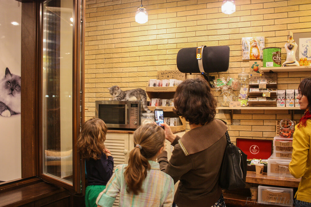 Котофейня-227.jpg