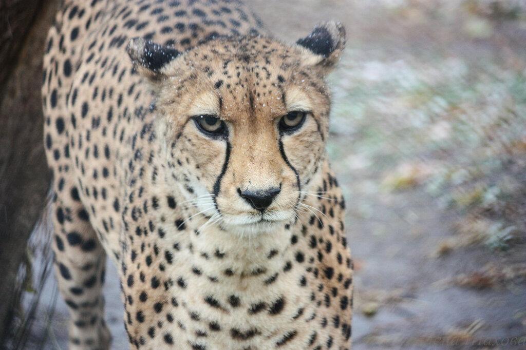 Зоопарк-33.jpg